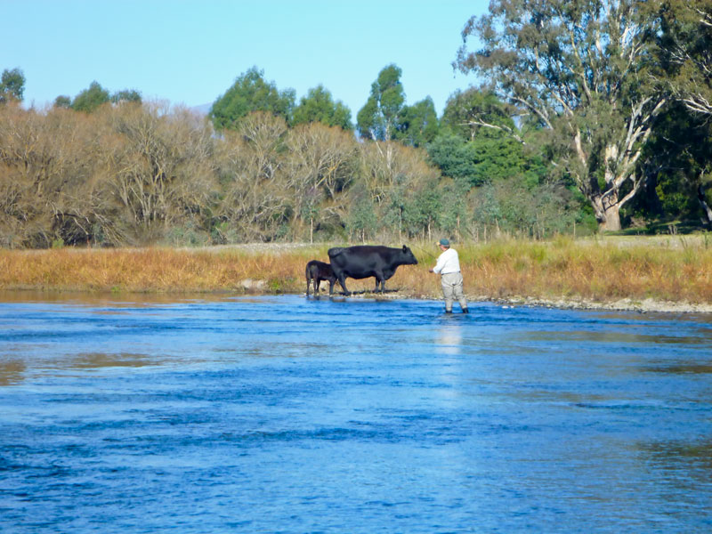 goulburn river fly fishing